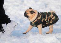 Llevar al perro con abrigo no es una horterada