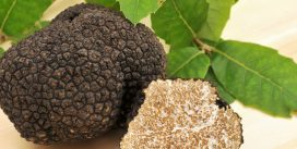 Trufa negra, un tesoro culinario escondido
